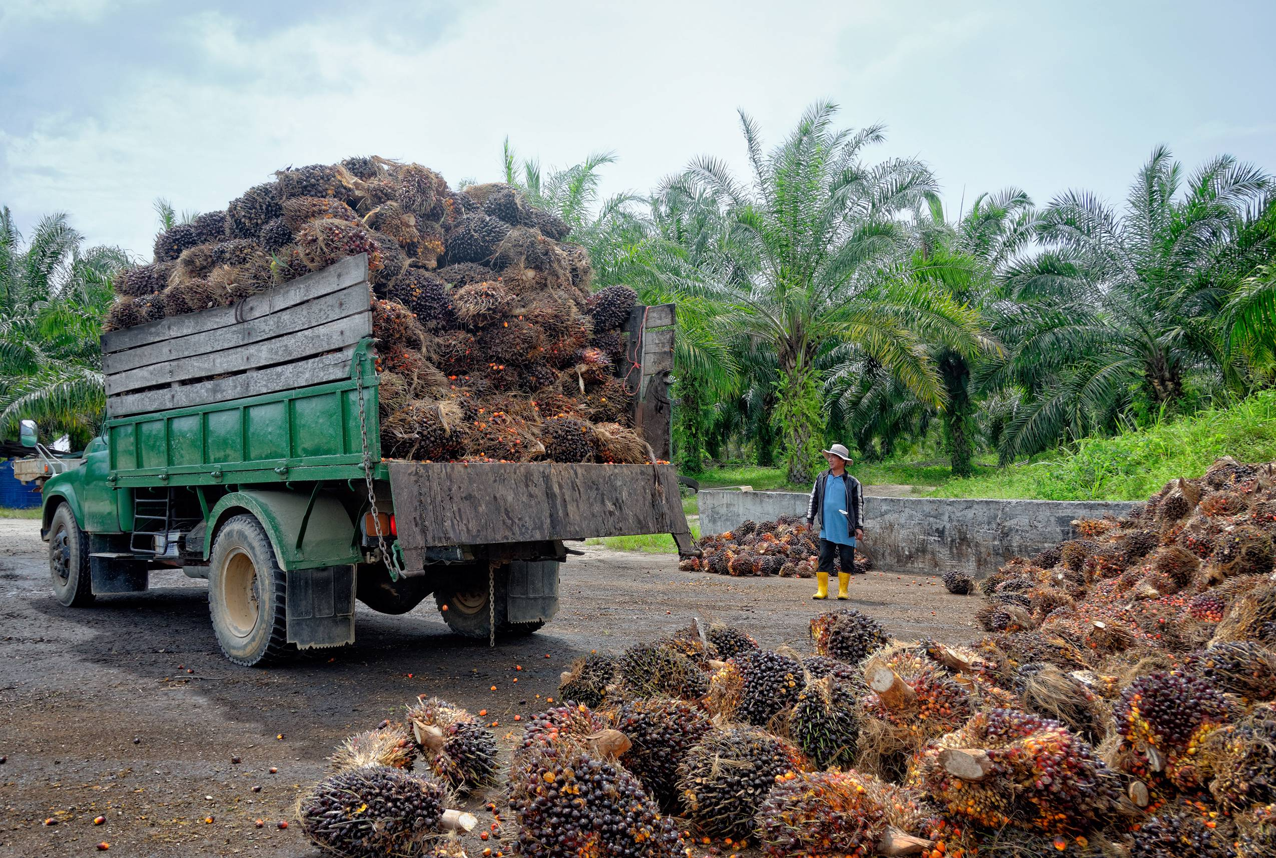Truck in the tropics loaded with jackfruit